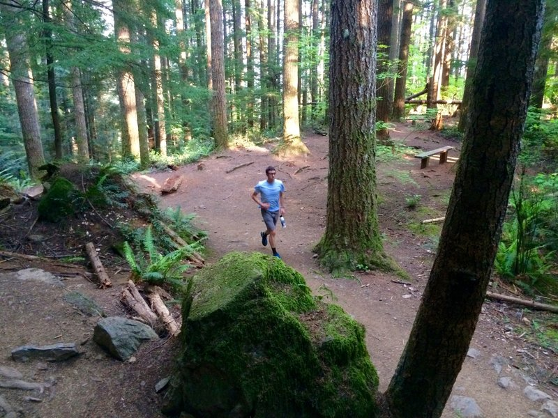 More gorgeous trail up Mt. Si