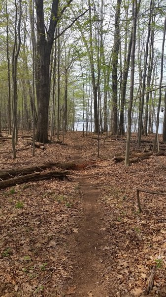 North section of Peninsula trail with Shenango Reservoir viewed through the trees