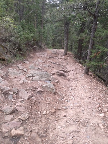 The terrain of the trail for the first part. It gets less rocky, farther on!