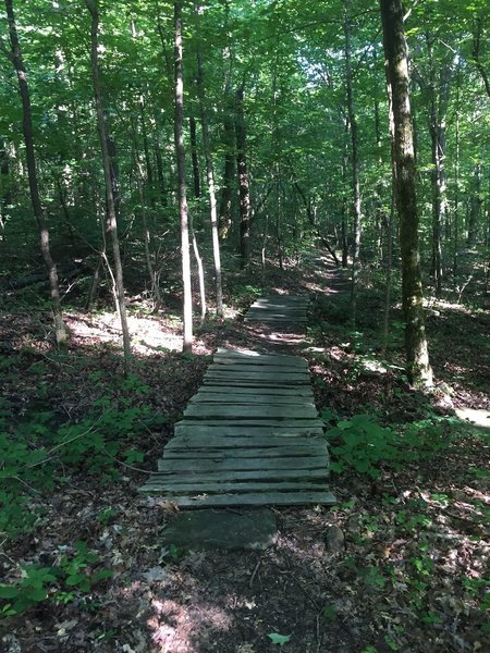 One of a few wooden bridges on the Logan Point Trail