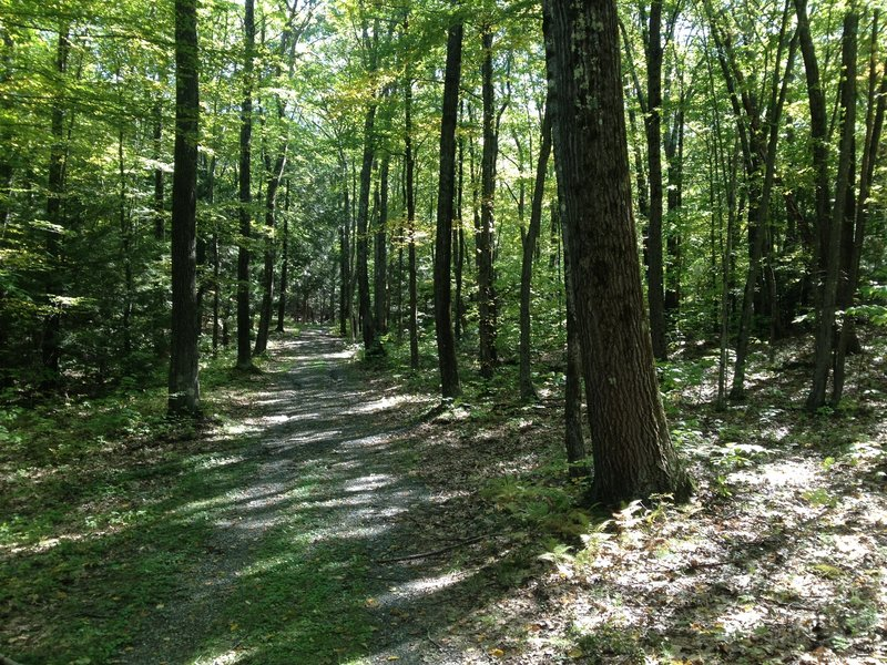 Classic Northfield forest trail