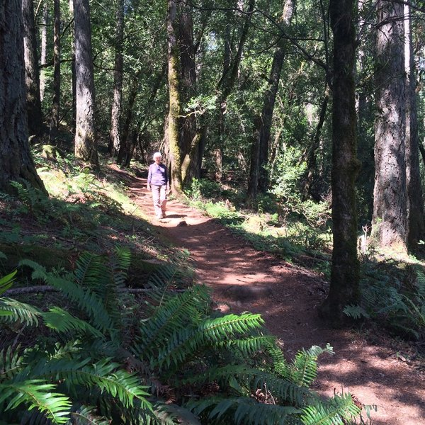 Lovely ferns and forest on the Steve's S Trail