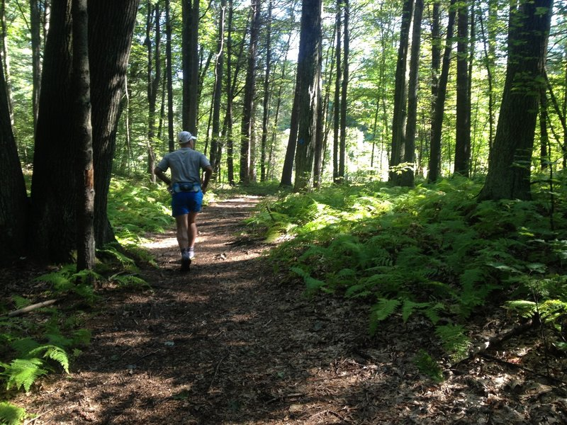 Running through beautiful New England forests