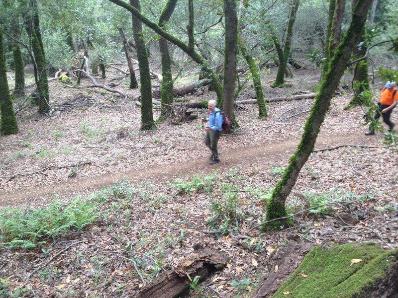 Sonoma Mountain Ridge Trail opens to the public, Spring, 2015.