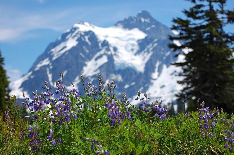 Alpine flowers.