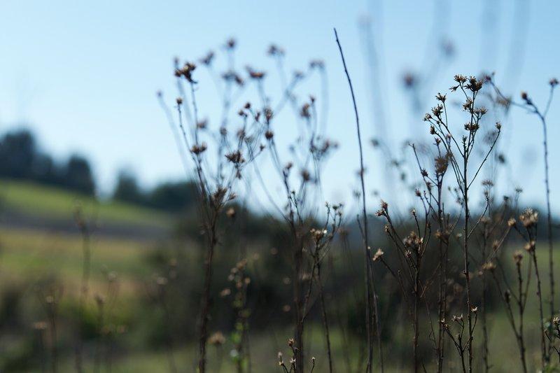 A macro shot on the Lake View Trail.
