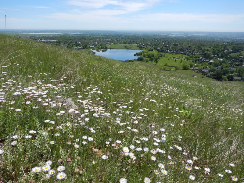 Wildflower profusion