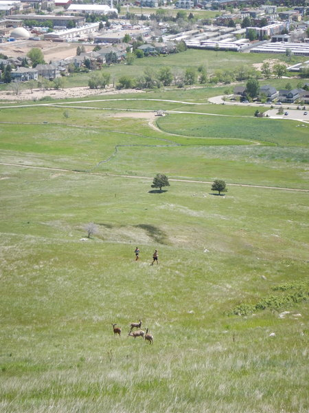 The local deer population is used to seeing trail runners