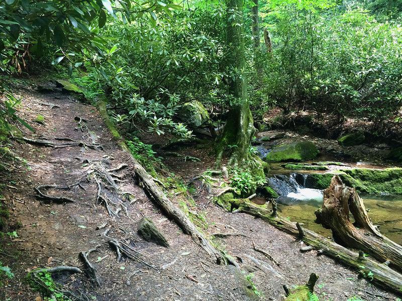 Climbing the creek bed.