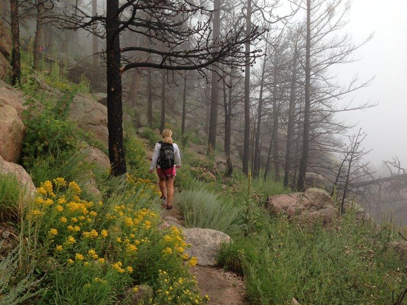 Rainy day on Greyrock Mountain.