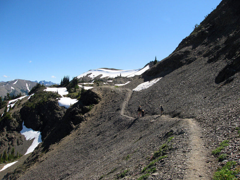 Almost back to Obstruction Point trailhead. (photo by pfly)