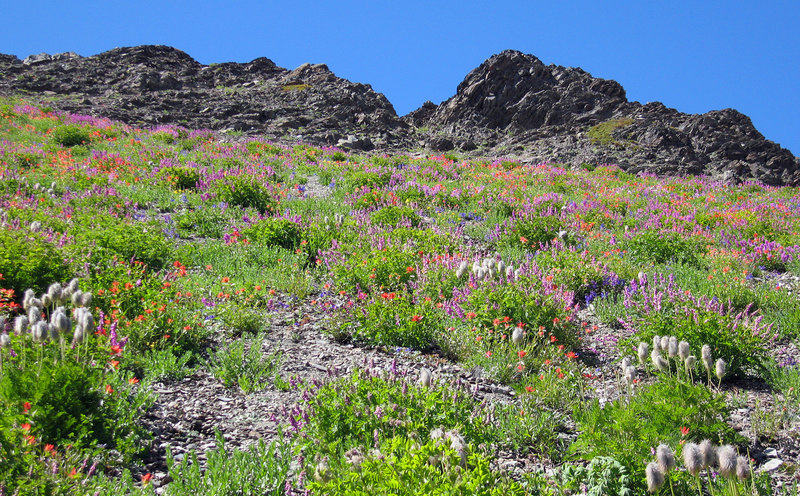 Wildflowers along the Obstruction Point - Deer Park trail.