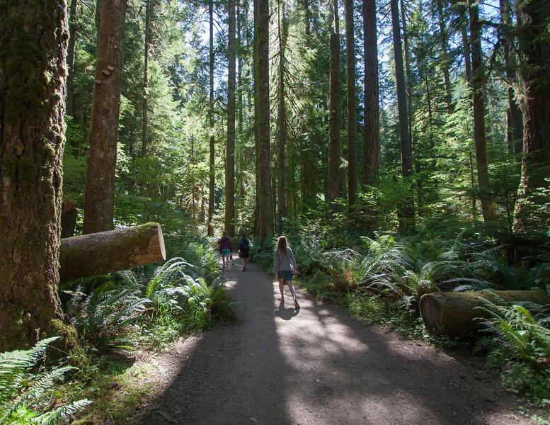 Enjoying the Marymere Falls Trail (photo by Ralph Arvesen)