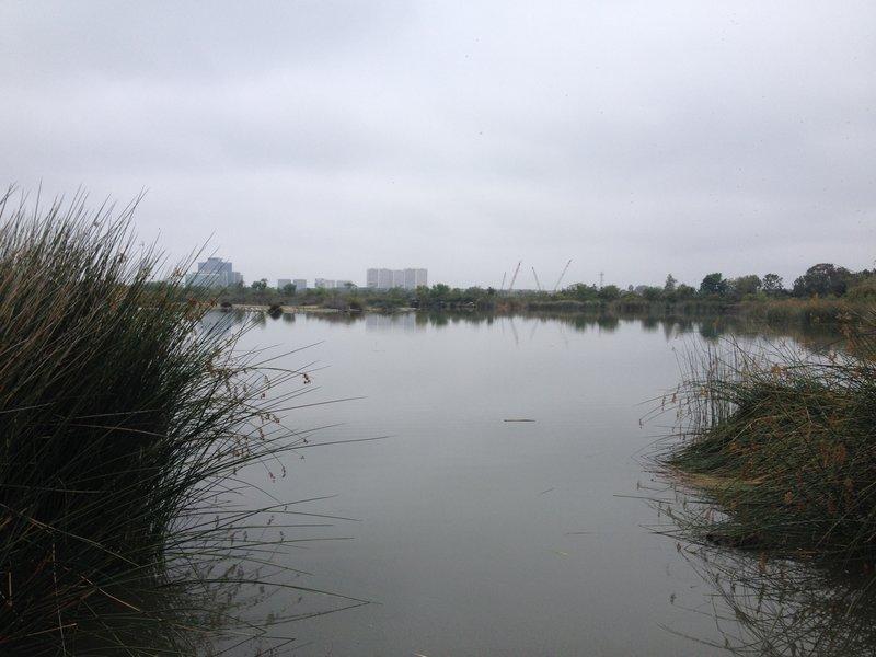 Ponds and more ponds