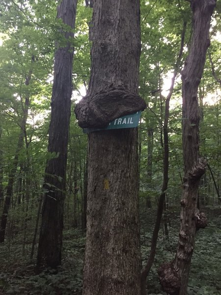 Old road sign on Mountain Mist overcome by tree growth