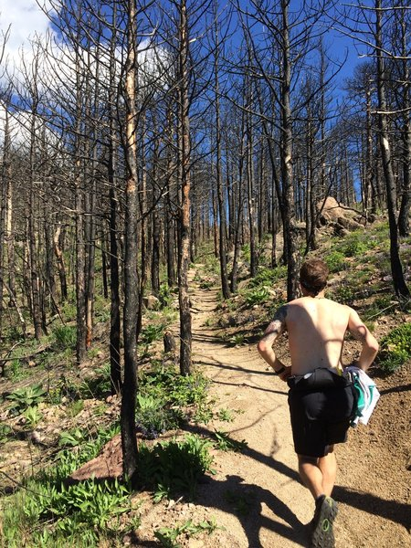 Once you get to the runnable section inside the burned area, the lung-busting climb is almost over. You're not far from the saddle and great views of Walker Ranch.