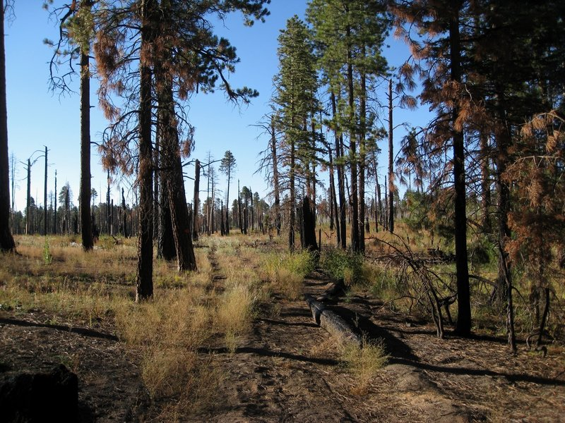 Large burn areas on the Komo Point Trail (photo by brewbooks)