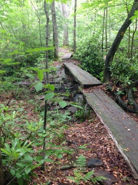 Typical creek crossing along the LHHT using fallen trees cut in half.  Slippery when wet.