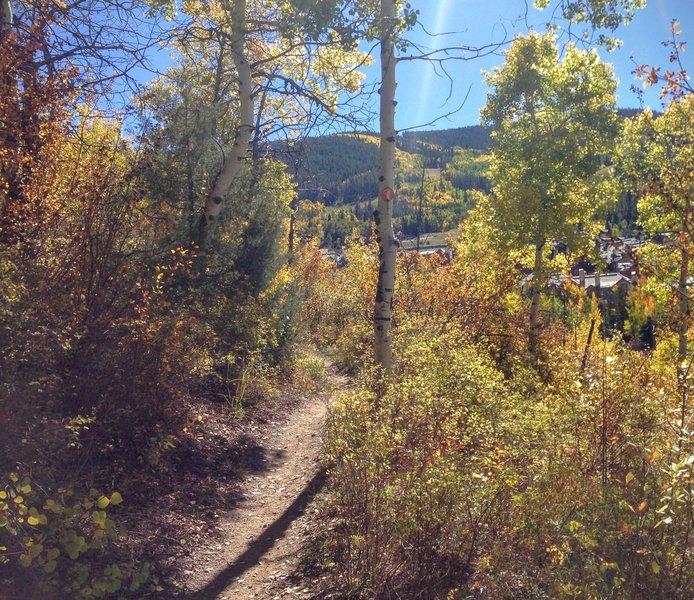 Early fall run on Buddy's Way.