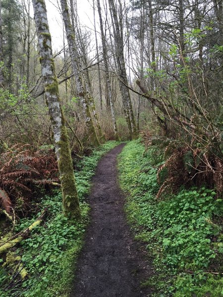 Smooth surface on the Lost Beagle Trail