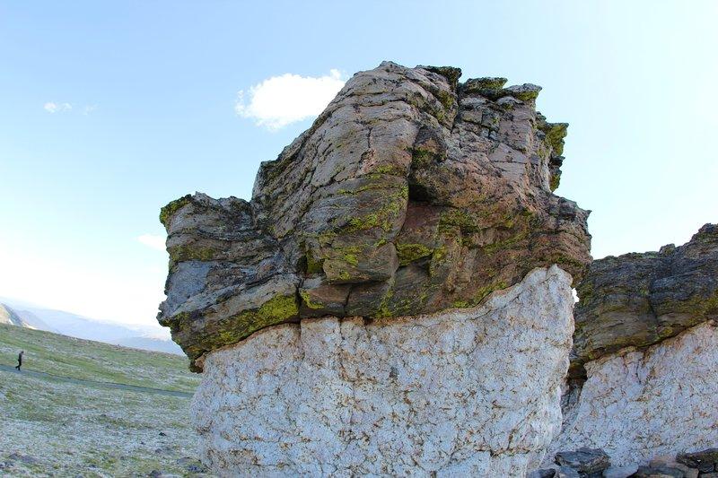 Lichen hanging from mushroom rock