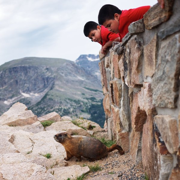 Curiosity - Don't feed the Marmots!