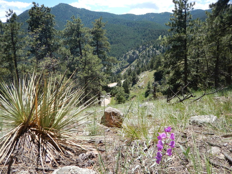 The southern flank of Flagstaff Mountain gets enough sun to grow yuccas