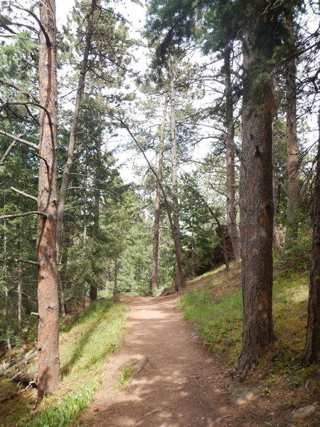 Pleasant, briefly level section of the Saddle Rock Trail