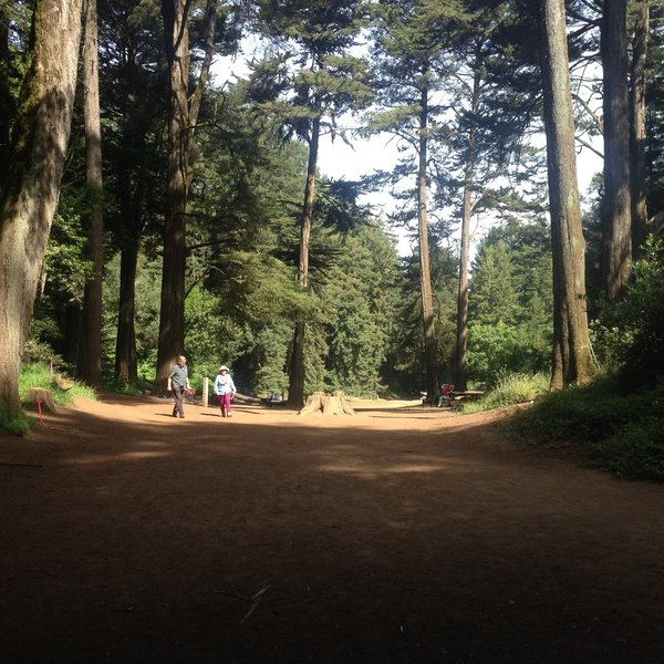 Redwood Bowl. Water Fountain straight ahead.
