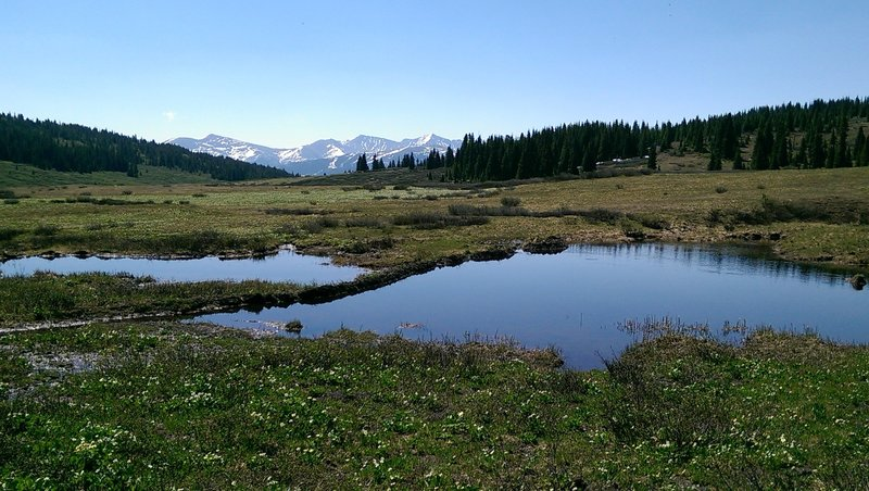 Two small boggy ponds along the Shrine Ridge Trail