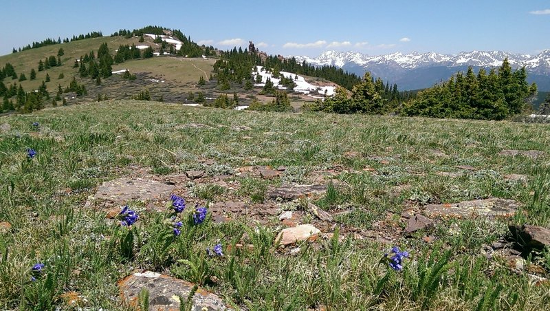 Early season wildflowers along the Wingle Ridge Trail