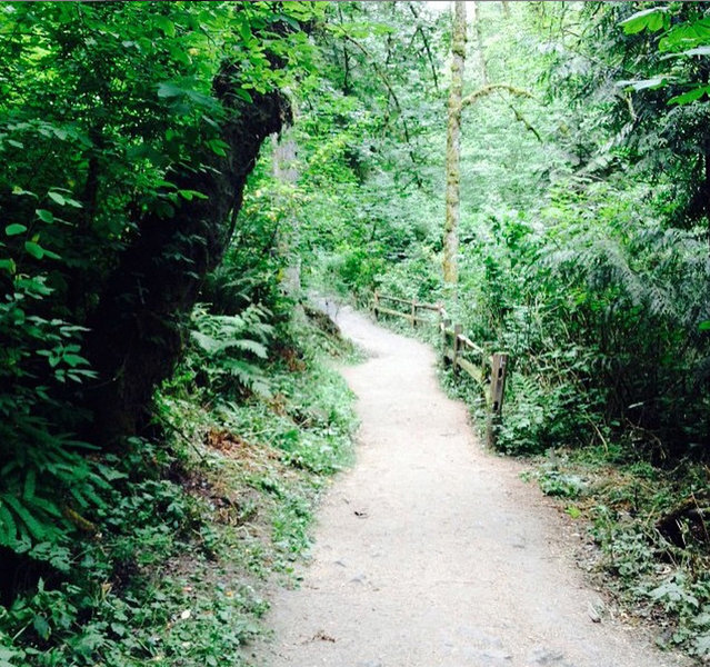 Lower MacLeay Trail along the creek.