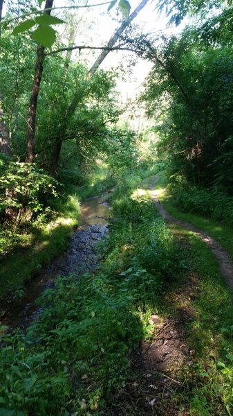 Trout Brook and singletrack