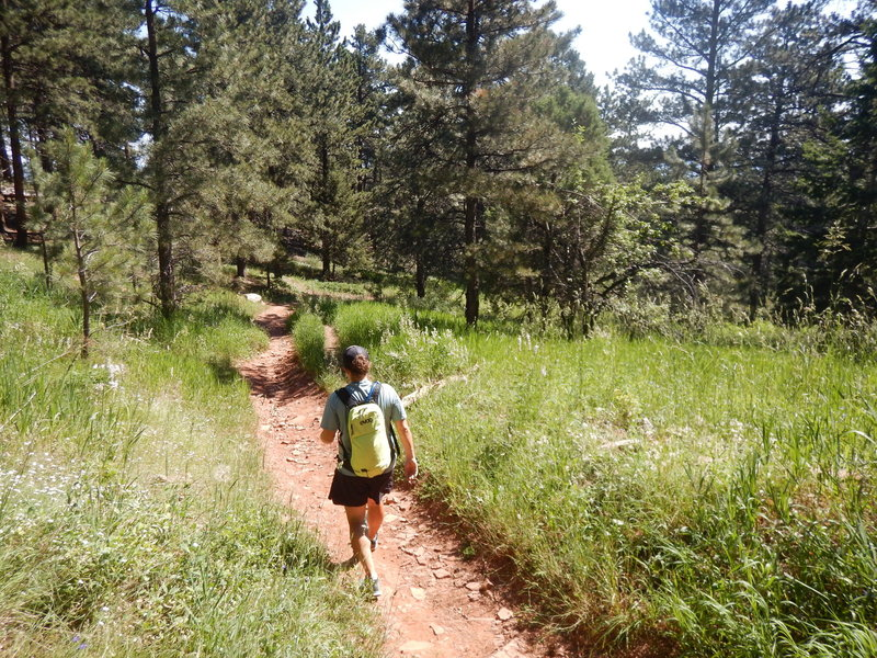 Descending the Woods Quarry Trail