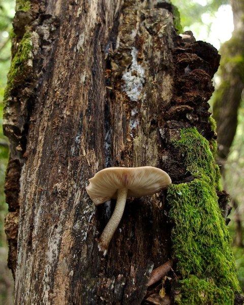 Mushroom growing on dead tree