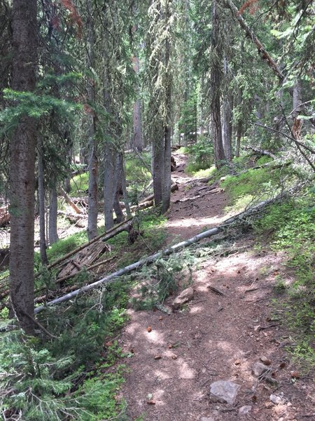 Heading up the trail near where the singletrack section starts