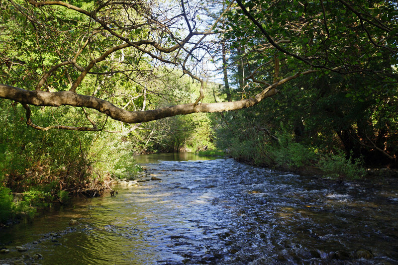 Andrew Molera State Park, River Trail, Big Sur River