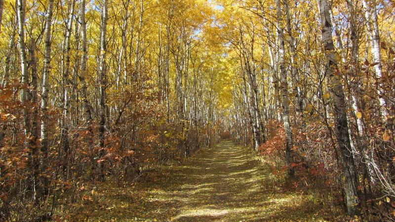 Birds Hill Provincial Park, Manitoba (481672)