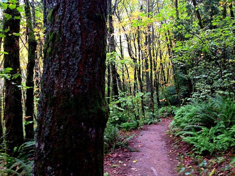 Forest run!