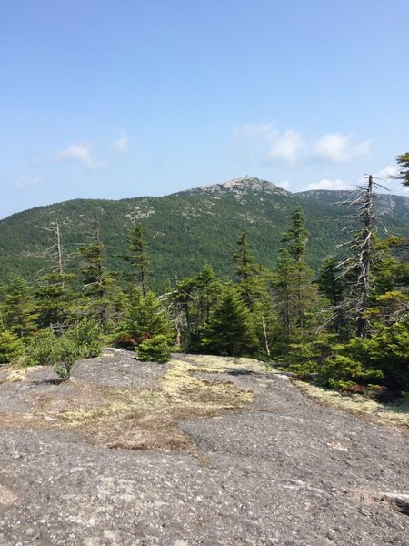 Photo from the Skyland Trail looking north toward the summit of Mt. Cardigan