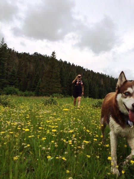 Lush grass through Horse Thief Meadows
