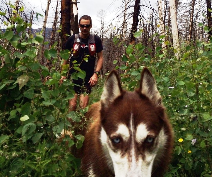 Route finding through the new growth after the fire 2 years ago.  Ultra dog is not too sure about this...