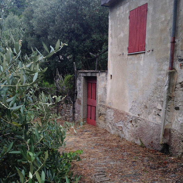 A rustic house among the olive trees