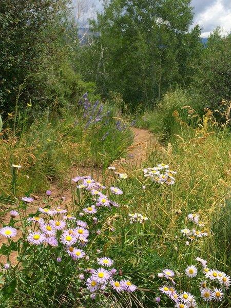 Great wildflowers in early July
