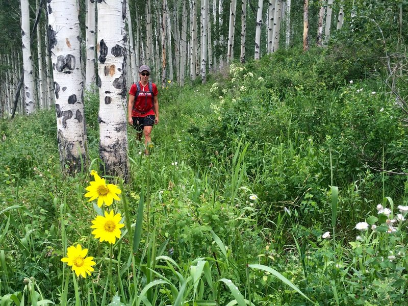 The aspen forests get jungle-like on wet year.