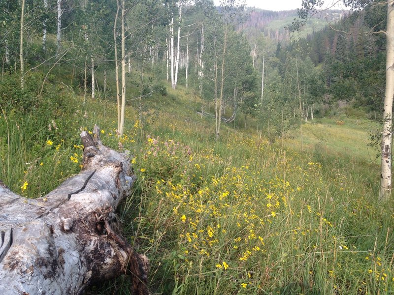 A nice open meadow where the trail meets the creek.