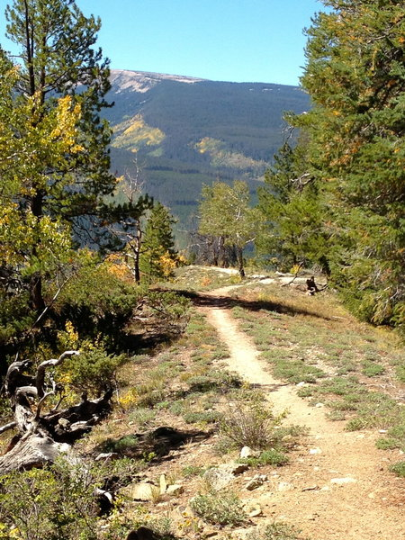the last bit of easy trail before the descent turns considerably steeper and rockier.