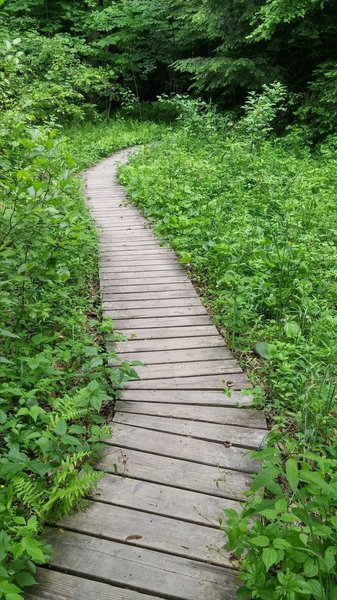 Elevated wooden tread along the Sore Heel Trail