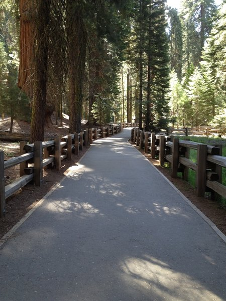 Congress Trail, Sequoia National Park