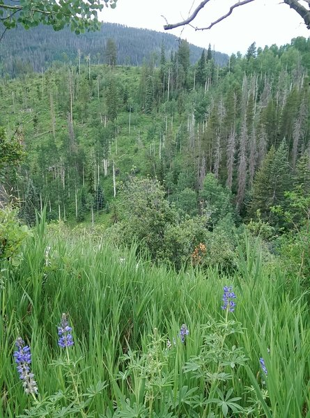 Be prepared for amazing wildflowers on this trail!
